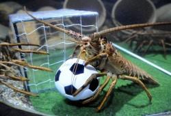 龙虾君看球团:2014巴西世界杯