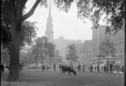 Boston Common与绿宝石项链