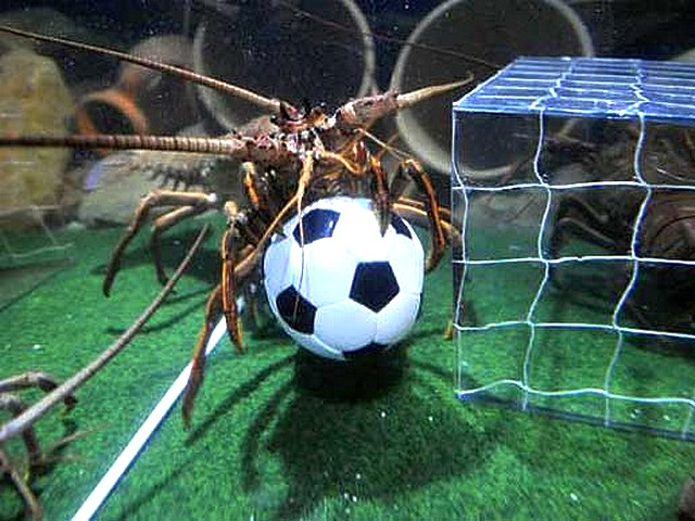 Animals-World-Cup-Lobster-at-Sea-Life-Aquarium-in-Germany