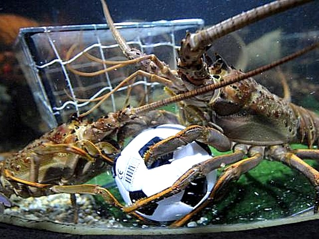 Animals-World-Cup-Lobsters-at-Sea-Life-Aquarium-in-Germany