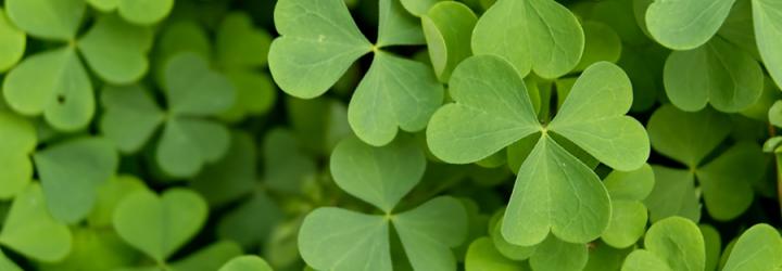 St. Patrick's Day必做的11件事