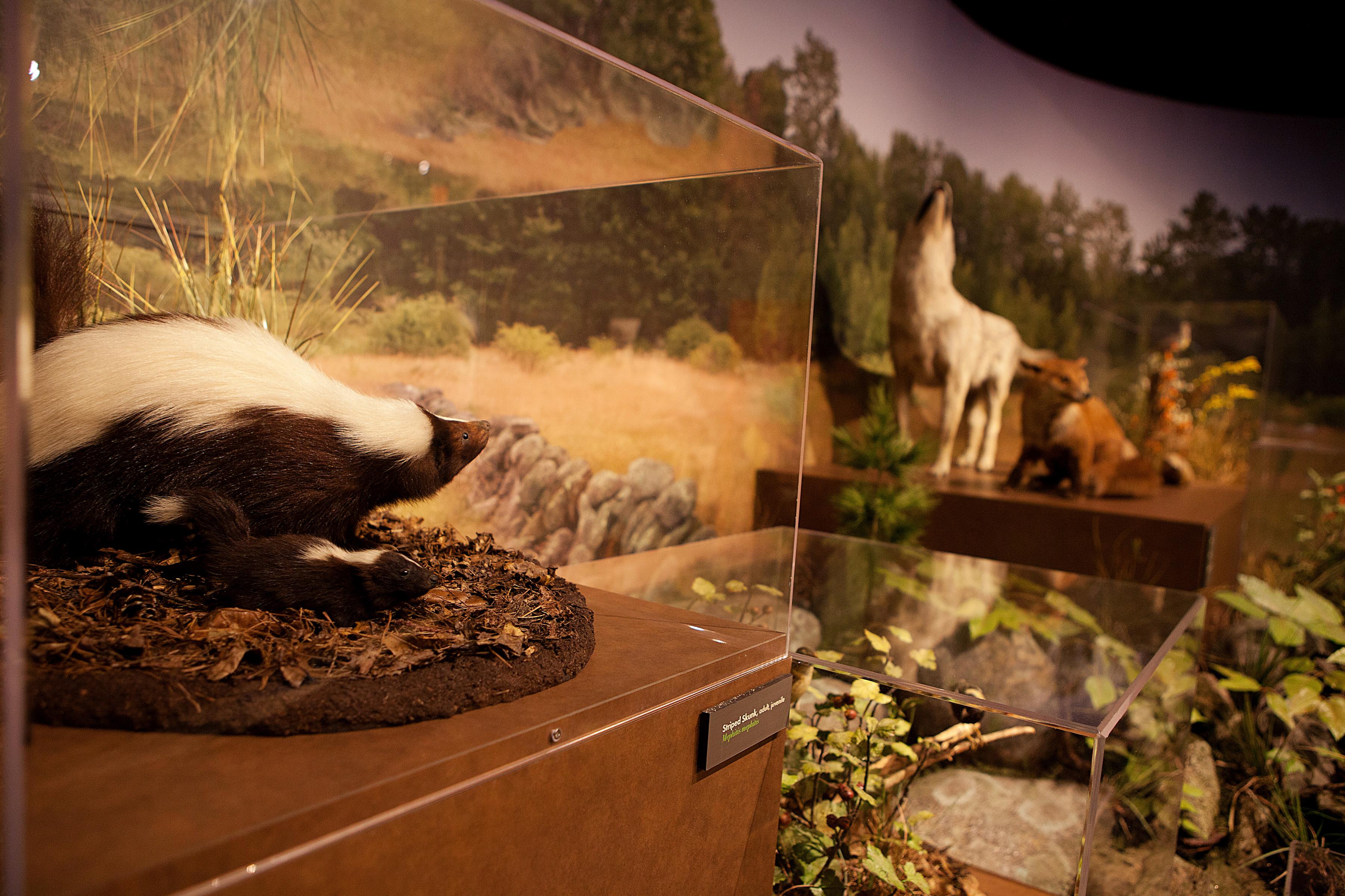 Harvard Museum of Natural History博物馆冬至之夜