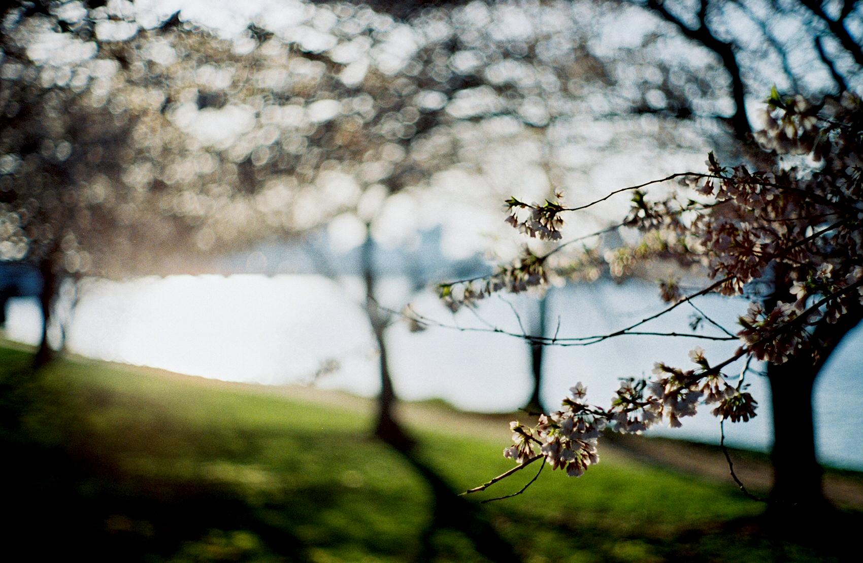 2012 Spring Essentials 波城开春宝典
